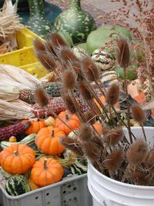 farmers market pumpkins guords indian corn thistles fall