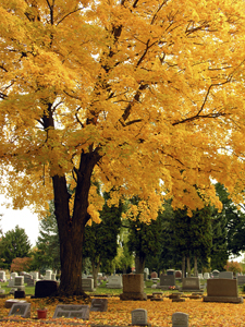 cemetary, cremation, laughter, funeral, parents