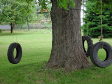tire swings cottonwood tree