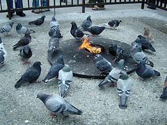 pigeons circling fire Chris Metcalf